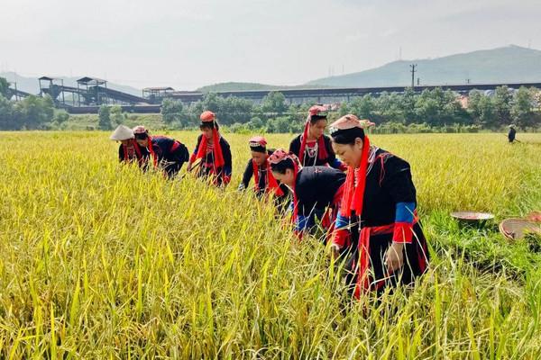 Bảo vệ môi trường vùng đồng bào DTTS - cách làm độc đáo của Thượng Yên Công