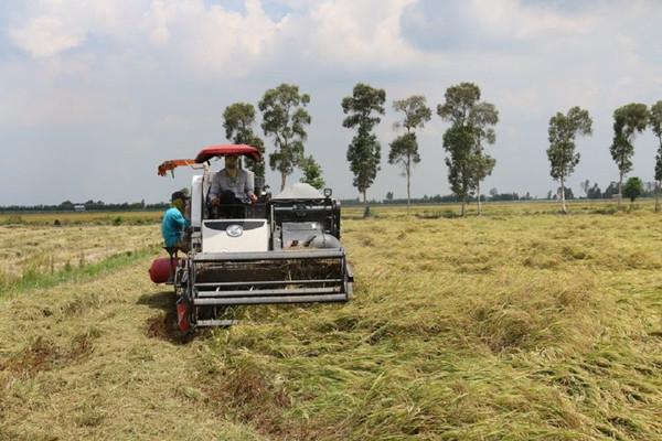 Agribank: Kịp thời cung ứng vốn phục vụ thu mua lúa gạo tại Đồng bằng sông Cửu Long