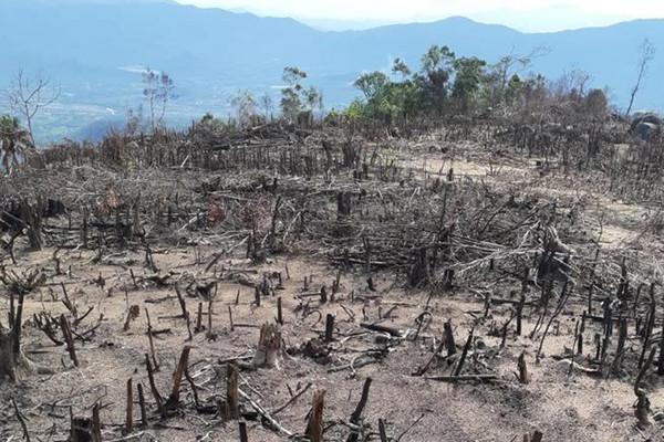 Bình Định: Điều tra, làm rõ đối tượng phá rừng xã Tây Thuận