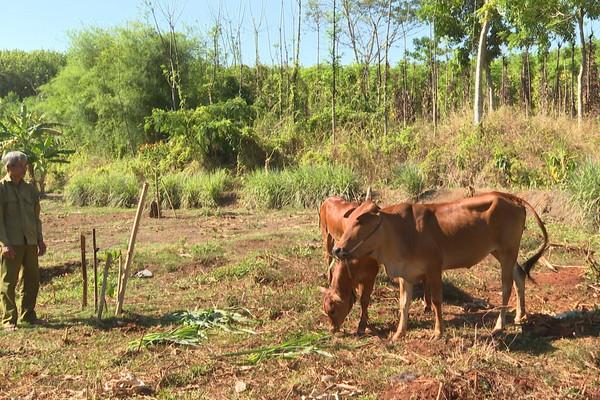 Huyện Bù Đốp hỗ trợ sinh kế cho người dân vùng biên