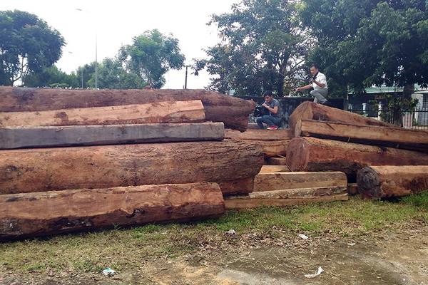 Hai cán bộ vướng lao lý vì để mất gần 50 khối gỗ rừng