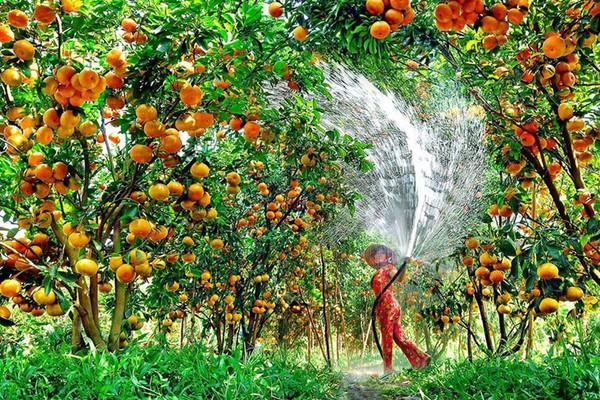 Đào giếng lấy nước sản xuất nông nghiệp trái phép bị phạt như thế nào?