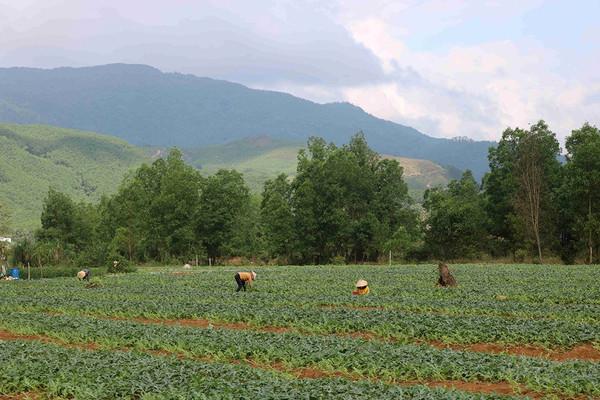 Bình Định xây dựng phương án giao đất cho đồng bào dân tộc thiểu số