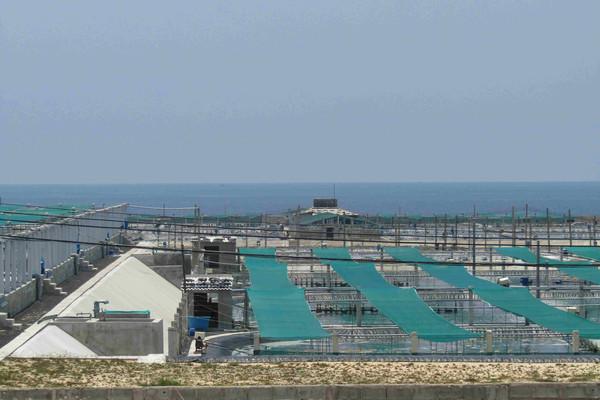 Phú Yên: Công ty Trí Huệ và Công ty thuỷ sản Trường Hải vẫn xả thải gây ô nhiễm
