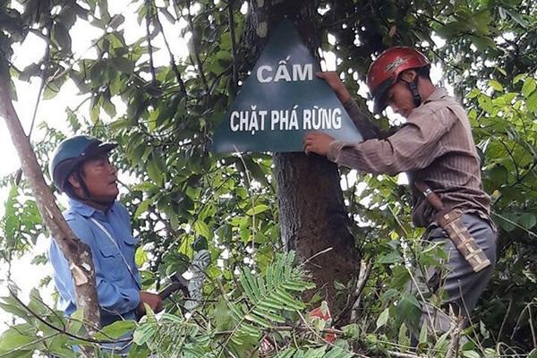 Nguồn lực để Mường Lay (Điện Biên) phát triển rừng bền vững