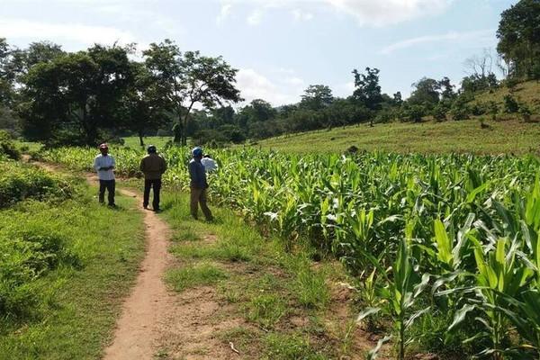 Bình Thuận: Giảm nguy cơ hoang mạc hóa từ việc giao khoán rừng cho đồng bào DTTS