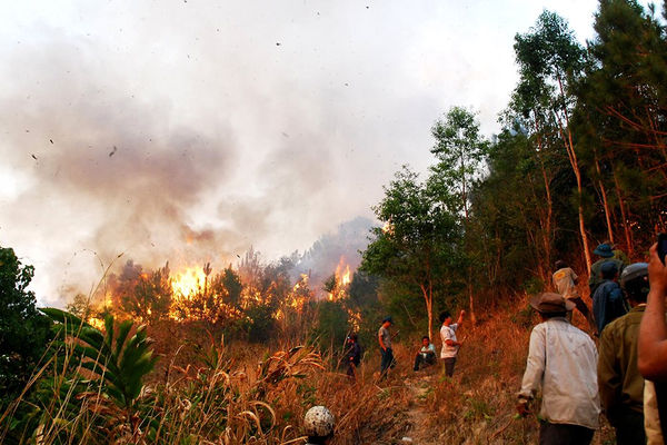 Đốt nương, rẫy gây cháy rừng bị xử phạt như thế nào