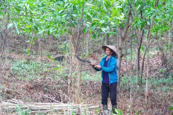 Những giấy tờ cần thiết khi đăng ký lần đầu đối với đất trồng rừng?
