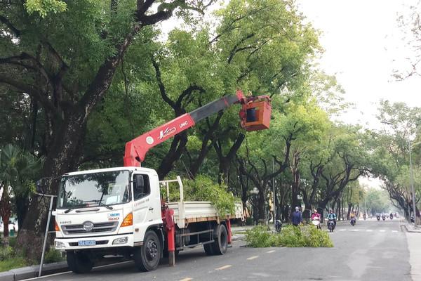 Thừa Thiên - Huế: Tăng cường quản lý cây xanh mùa mưa bão
