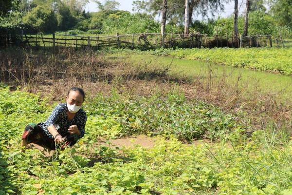 Nghi Xuân (Hà Tĩnh): Nhiều bất thường trong thu hồi đất nông nghiệp để cấp đất ở xen dặm?