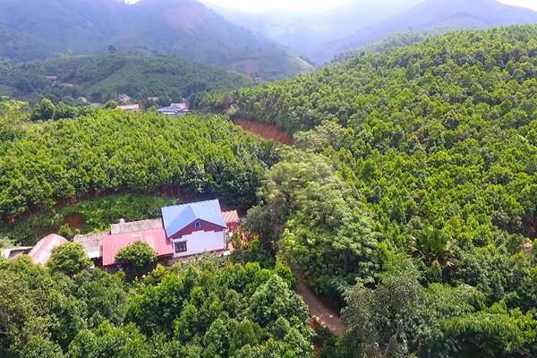 Yên Bái: Sử dụng có hiệu quả đất lâm nghiệp