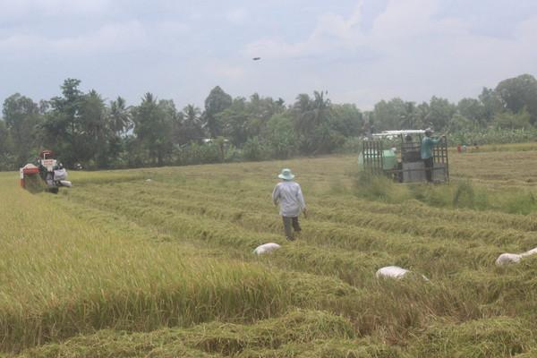 Hậu Giang: Tập trung khôi phục sản xuất nông nghiệp gắn với bảo vệ môi trường