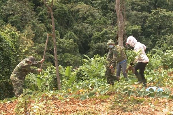 Quảng Bình: VQG Phong Nha - Kẻ Bàng trồng phục hồi rừng tại các điểm sạt lở đất