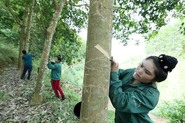 Điện Biên: Việc cấp GCNQSDĐ đất lâm nghiệp cho dân bao giờ xử lý dứt điểm?