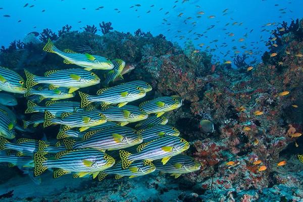 UNESCO khởi động dự án bảo tồn đa dạng sinh học