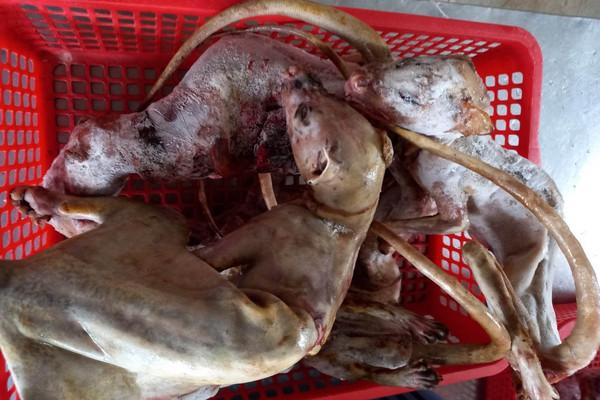 TP. Huế: Bắt quả tang nhà hàng mua bán động vật hoang dã