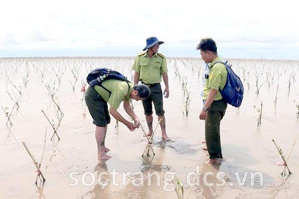 Sóc Trăng: Tăng cường công tác bảo vệ rừng phòng hộ ven biển