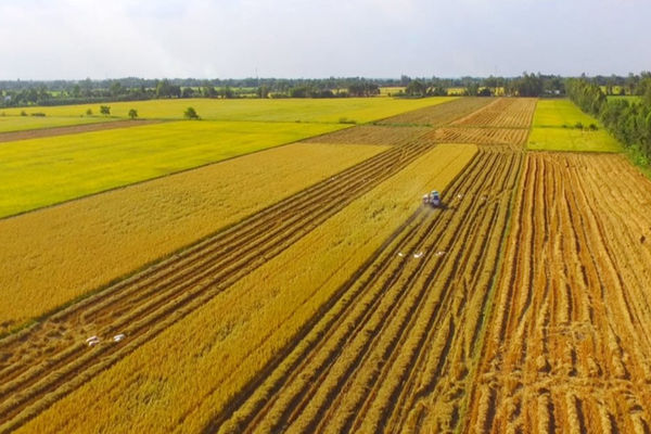 Cởi nút thắt trong tích tụ ruộng đất: Những mô hình hay