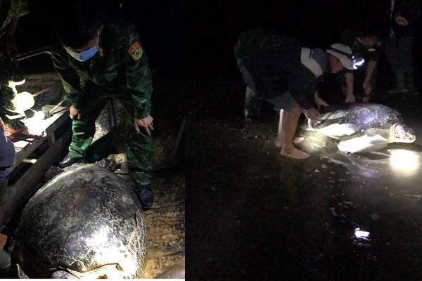 Quảng Bình: Thả cá thể rùa quý hơn 120 kg mắc lưới ngư dân về biển
