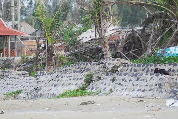 Quảng Ngãi: Xâm thực mạnh, đe doạ xoá sổ làng biển