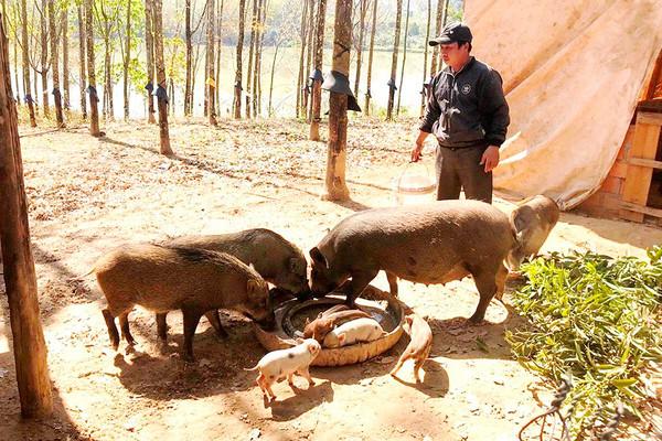 Kom Tum: Phát triển sinh kế cho người dân từ chính sách chi trả dịch vụ môi trường rừng